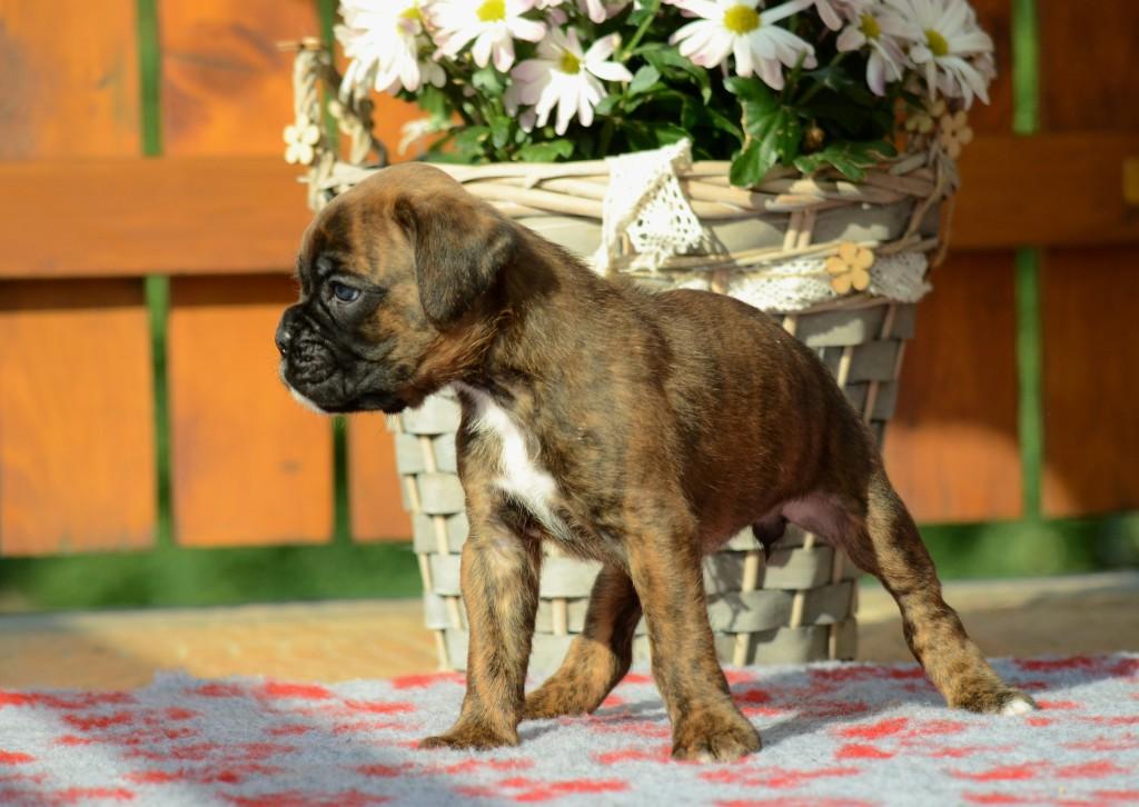 Bessie 1 měsíc