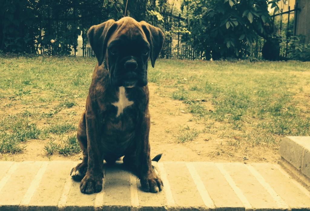 bessie 2 měsíce